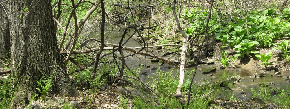 creek1000x375
