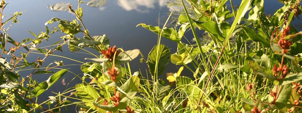 Butler Township Wild Flower